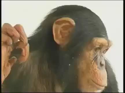 Scimmia bacio